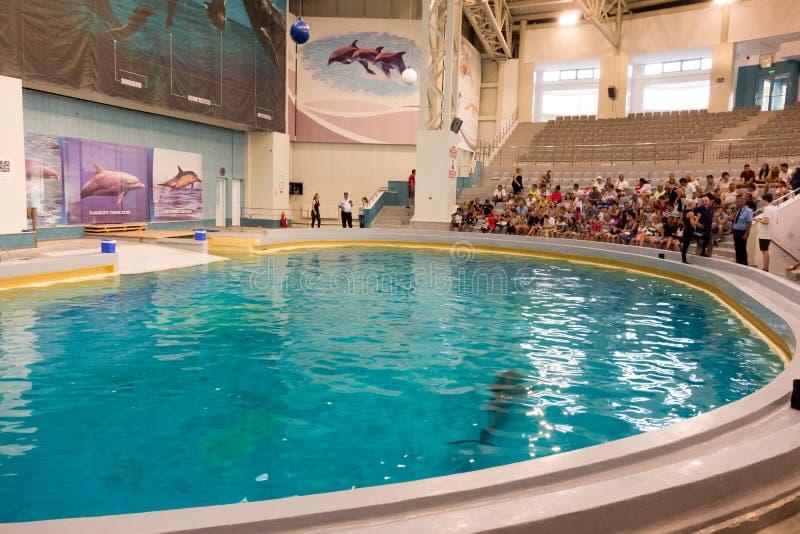Silhouette de dauphin dans l'eau au dolphinarium photos stock