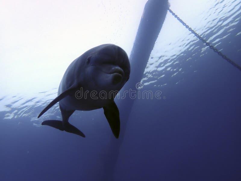 Silhouette de dauphin sur le nouveau site KAst image libre de droits