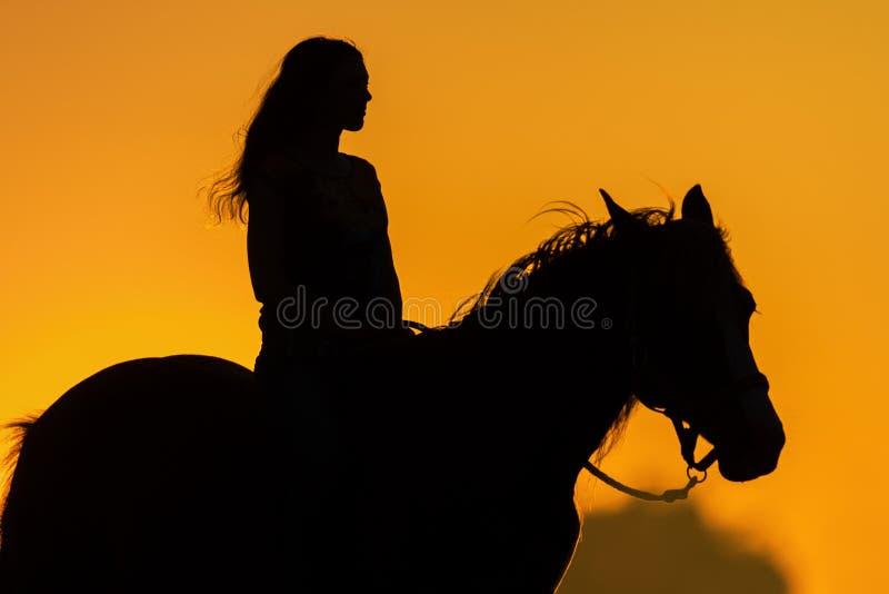 Silhouette de fille et de cheval photo stock