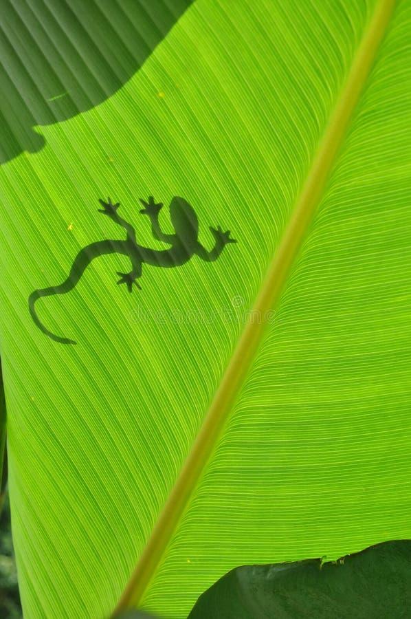 Silhouette de Gecko photographie stock libre de droits