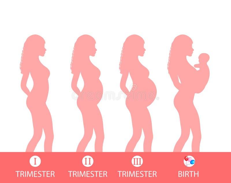 Silhouette de grossesse, étape de grossesse, trimestres, accouchement Illustration de vecteur illustration libre de droits