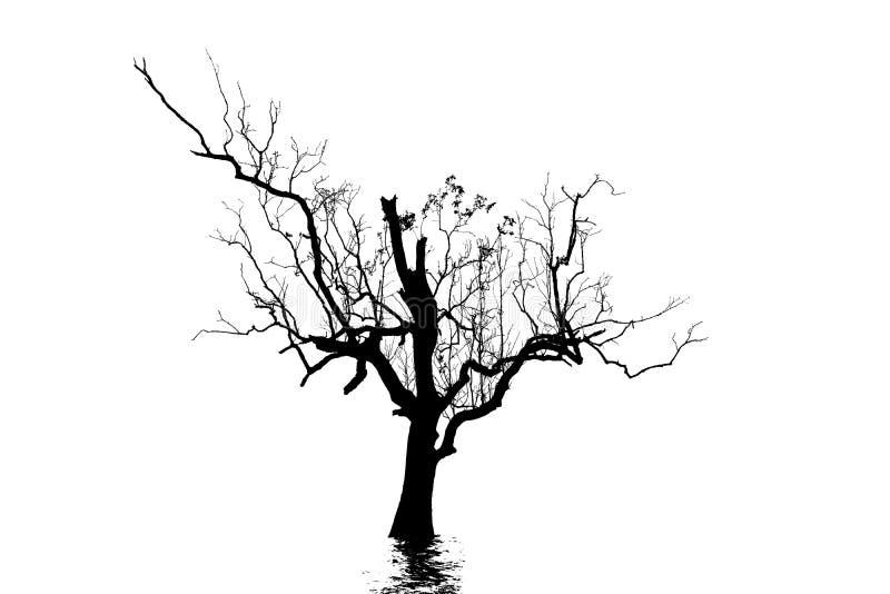 Silhouette de l'arbre mort photos stock