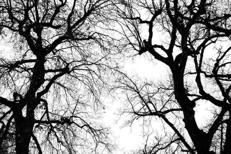 Silhouette de l'hiver d'arbre de chêne illustration de vecteur