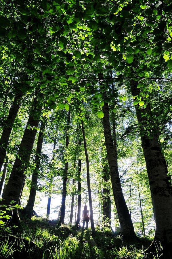 Silhouette de la fille dans la forêt images stock
