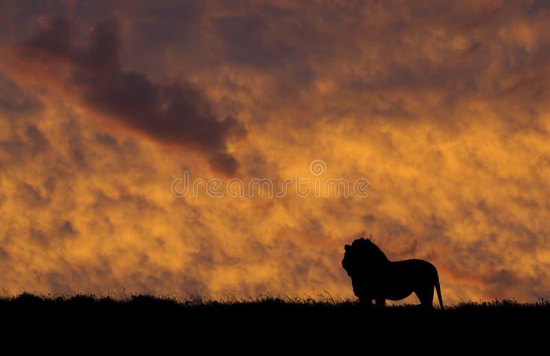 Silhouette de lion photographie stock libre de droits