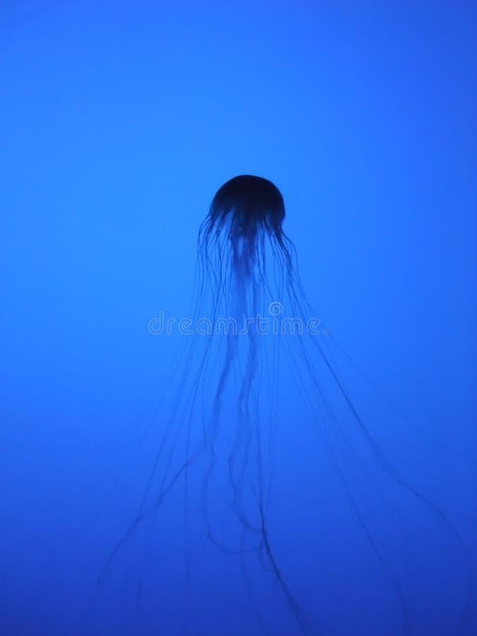 Silhouette de méduses image libre de droits