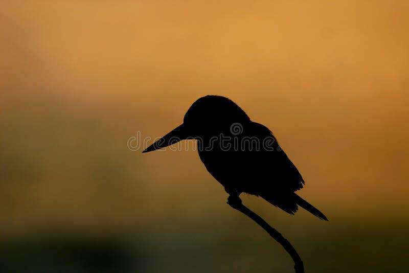 Silhouette de martin-pêcheur photographie stock