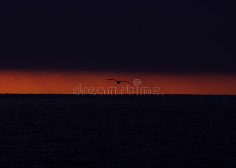 Silhouette de mouette contre la postluminescence orange de coucher du soleil photos libres de droits