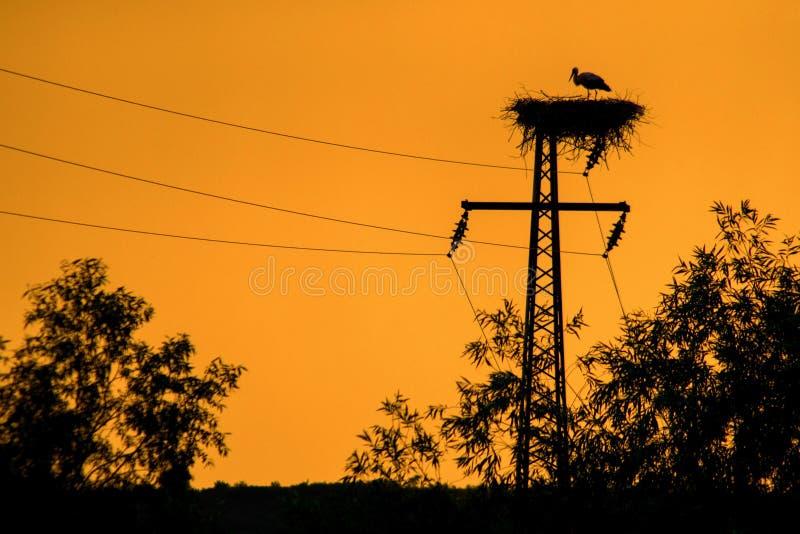 Silhouette de nid de cigogne au coucher du soleil photo stock