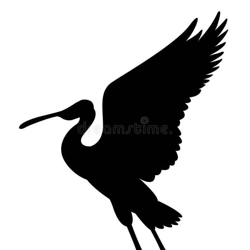 Silhouette de noir d'illustration de vecteur d'oiseau de spatule rose illustration stock