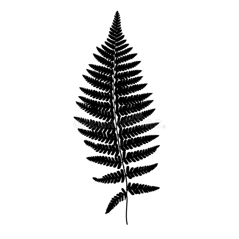 Silhouette de noir de fronde de fougère Illustration de vecteur illustration stock