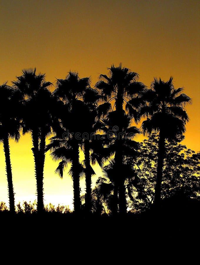 Silhouette de palmier photos libres de droits