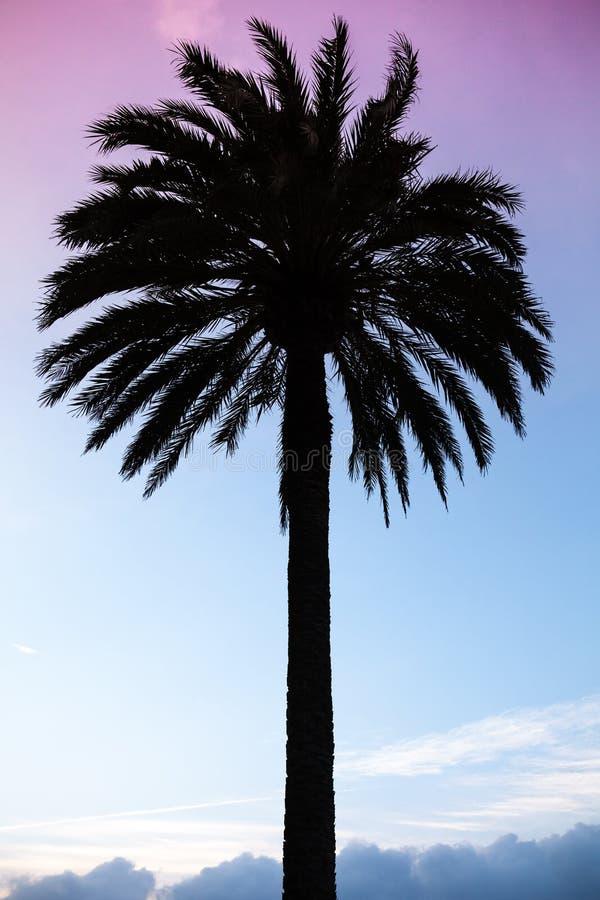 Silhouette de palmier au-dessus de ciel pourpre bleu coloré image stock