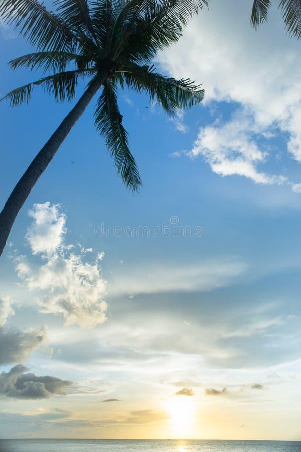 Silhouette de palmier et coucher du soleil de tropique image stock