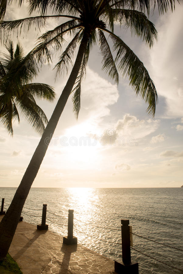 Silhouette de palmier et coucher du soleil de tropique photographie stock libre de droits