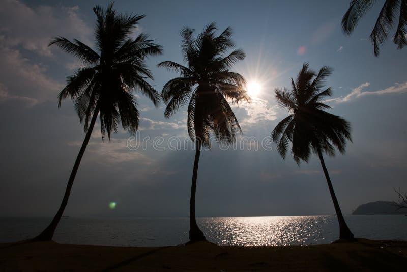 Silhouette de paumes image libre de droits