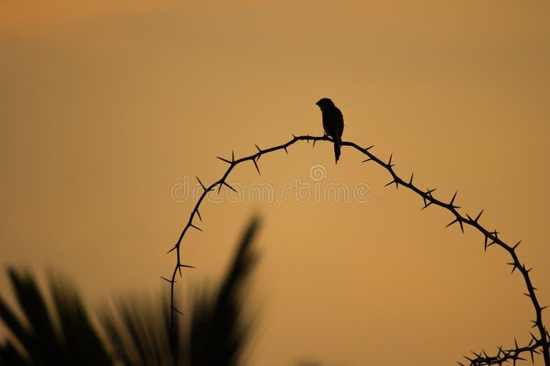 Silhouette de petit oiseau étant perché une tige épineuse, avec la silhouette des feuilles de noix de coco dans le coin images libres de droits