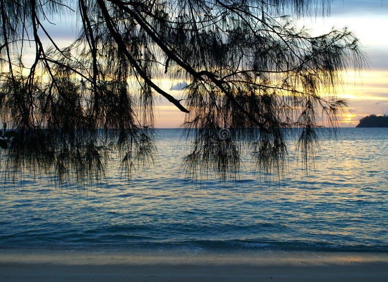 silhouette de Pin-arbre sur le coucher du soleil images libres de droits