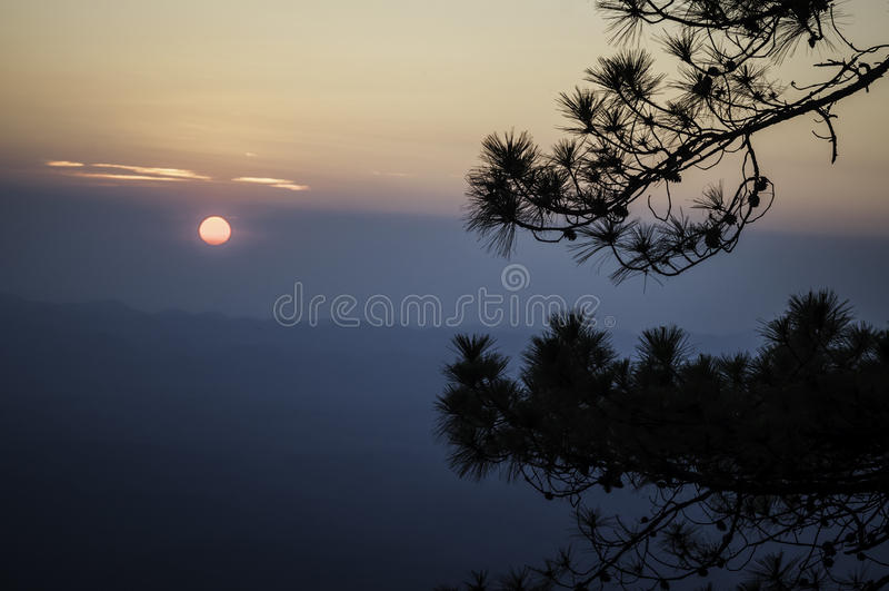 Silhouette de pin sur le coucher du soleil de montagne photo stock