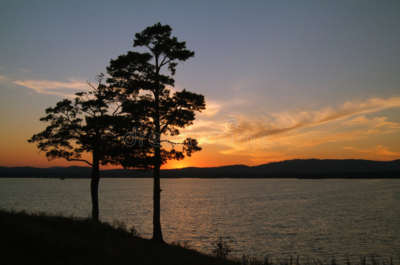 Silhouette de pins photographie stock libre de droits