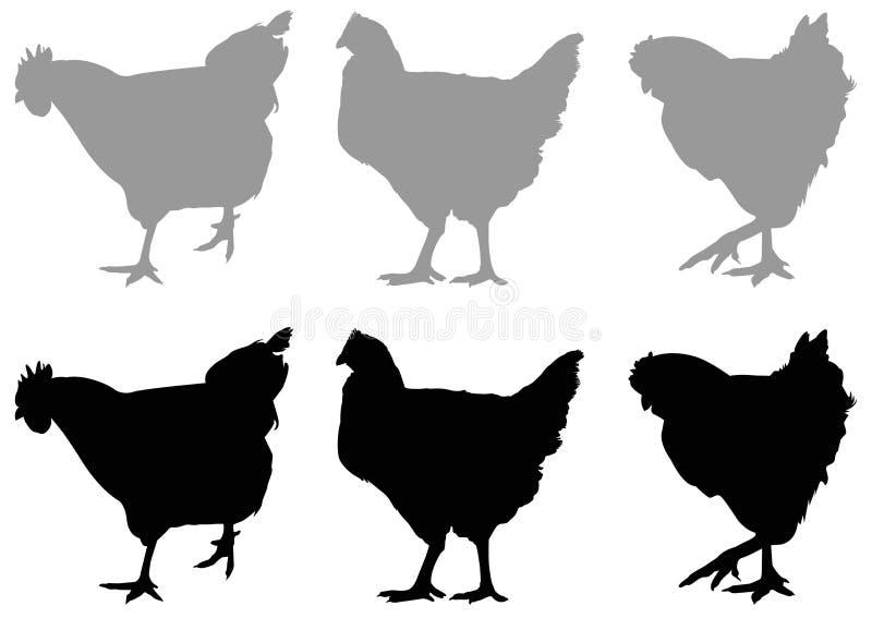 Silhouette de poulet ou de poule - oiseau domestique, volaille illustration de vecteur