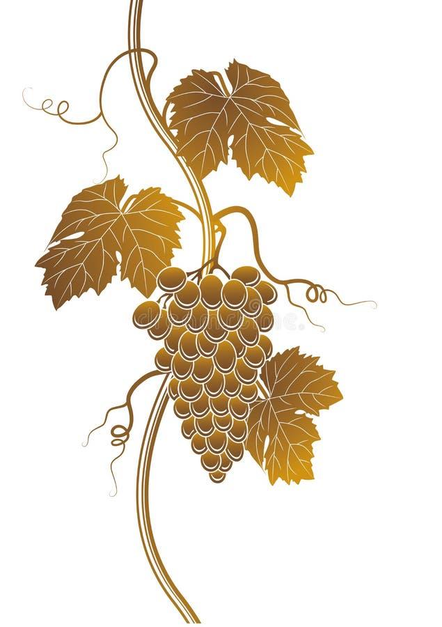 Silhouette de raisins photo stock