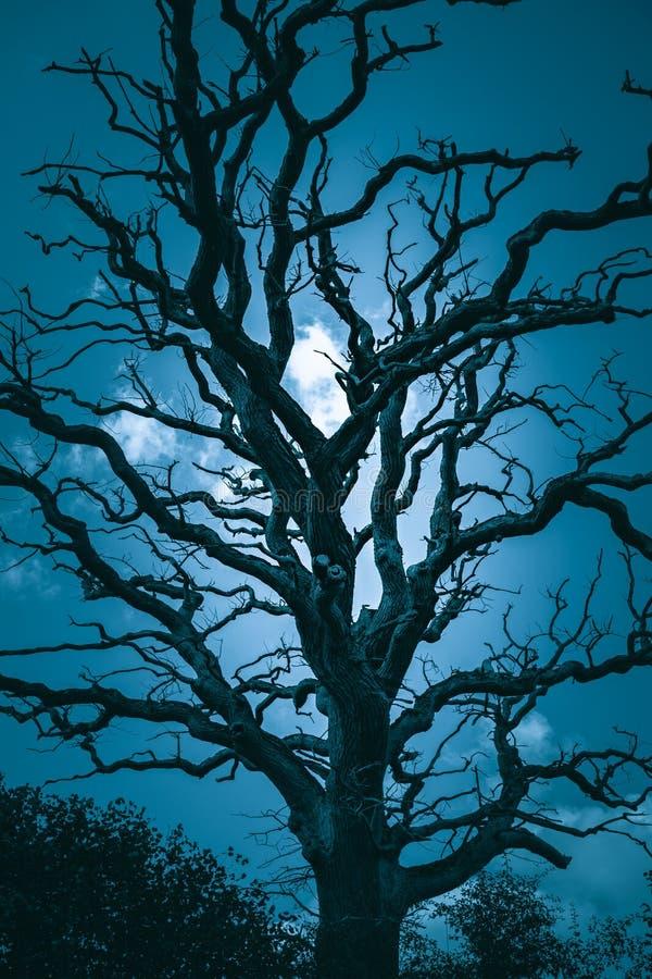 Silhouette de vieil arbre la nuit images libres de droits