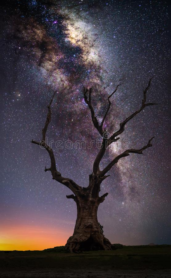Silhouette dead big tree on hill with milky way at sunrise stock photo