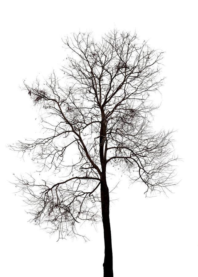 dead tree isolated stock photo