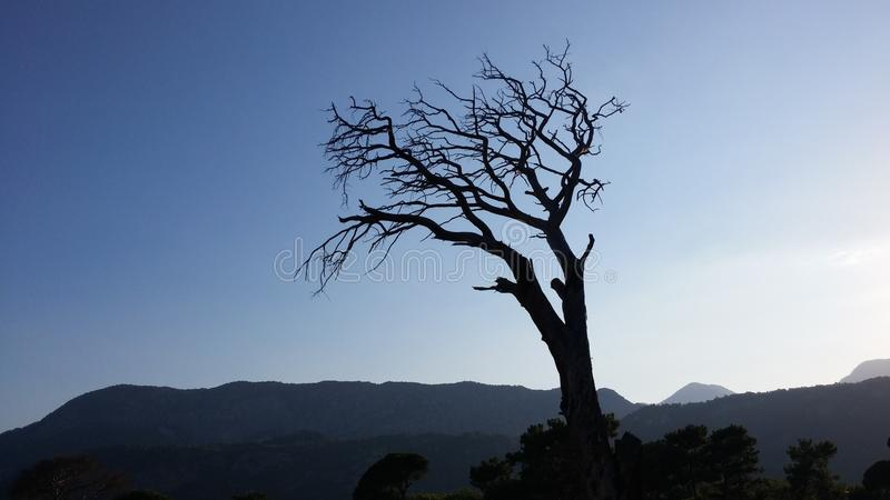 Silhouette of dead tree at sea coast Sunset time. Cirali Turkey summer time royalty free stock photos