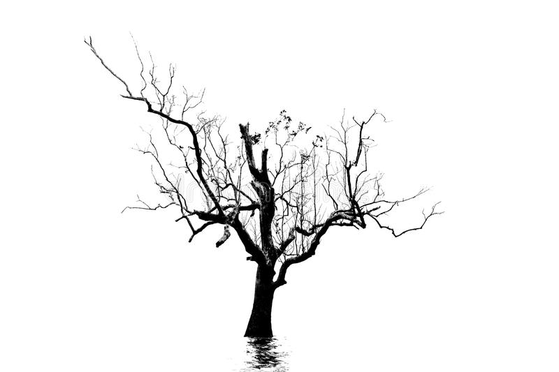 Silhouette of the dead tree . Silhouette of the dead tree with shadow ripple on the white background royalty free stock images