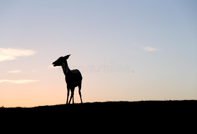 Silhouette of Deer under sunset. Outdoor beautiful landscape scenery royalty free stock images