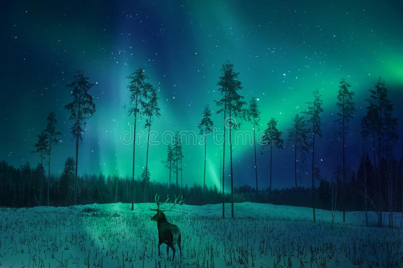 Silhouette of a deer in the winter forest against the backdrop of the northern lights. Winter artistic image. Silhouette of a deer in the winter forest against stock photography
