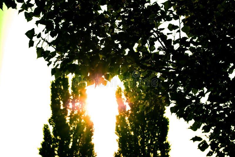 Silhouette des arbres au soleil image stock