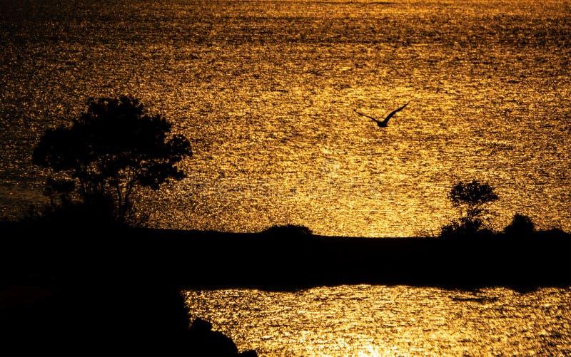 Silhouette des arbres et des mouettes au lever de soleil photographie stock