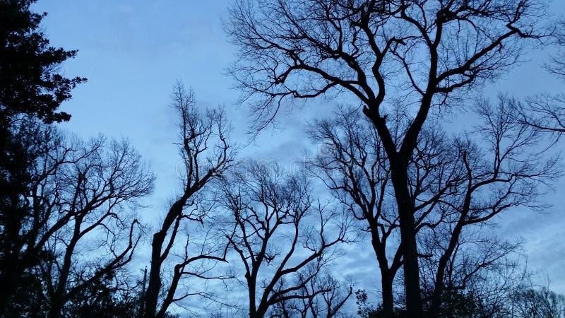 Silhouette des arbres sans feuilles grands contre un ciel nuageux bleu de fin de soirée - dramatique et beau photographie stock libre de droits