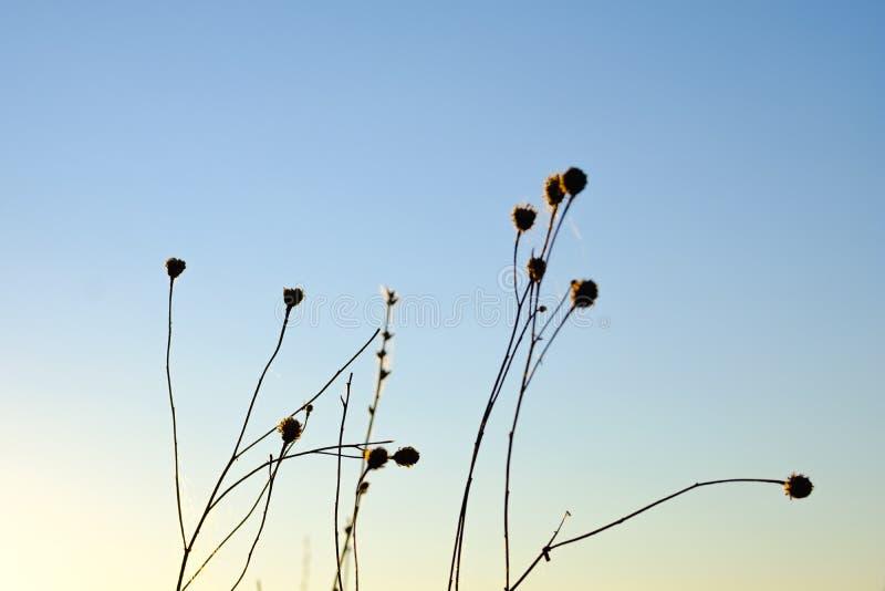 Silhouette des fleurs photo libre de droits