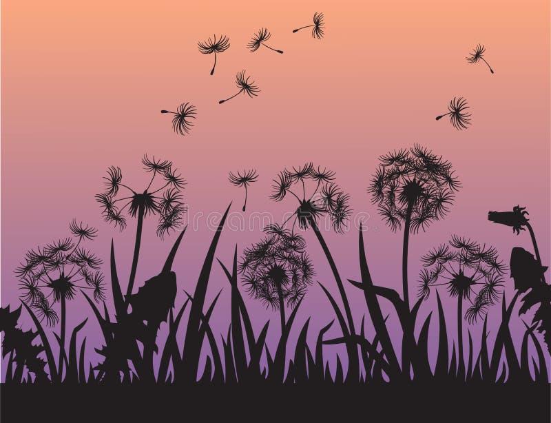 Silhouette des fleurs de pissenlit dans l'herbe illustration de vecteur