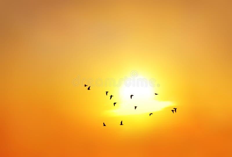 Silhouette des oiseaux image stock