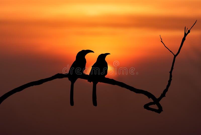 Silhouette des oiseaux images stock