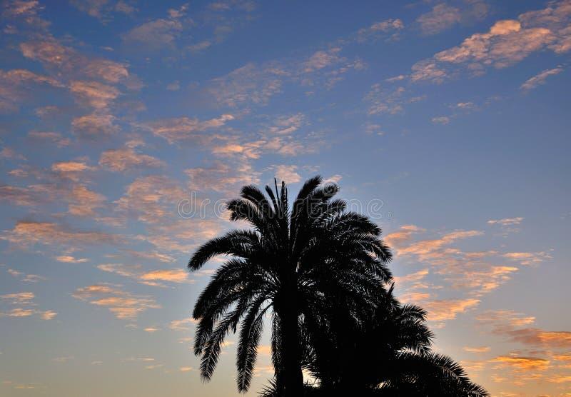 Silhouette des palmiers à l'aube image stock