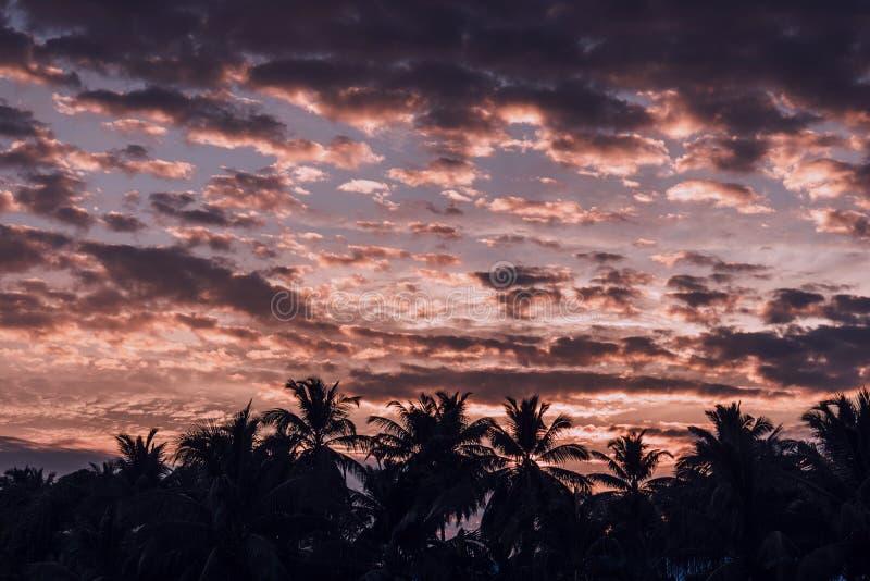 Silhouette des palmiers de noix de coco photo libre de droits