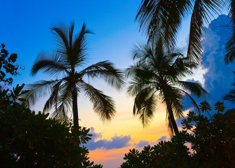 Silhouette des paumes et du coucher du soleil photos stock
