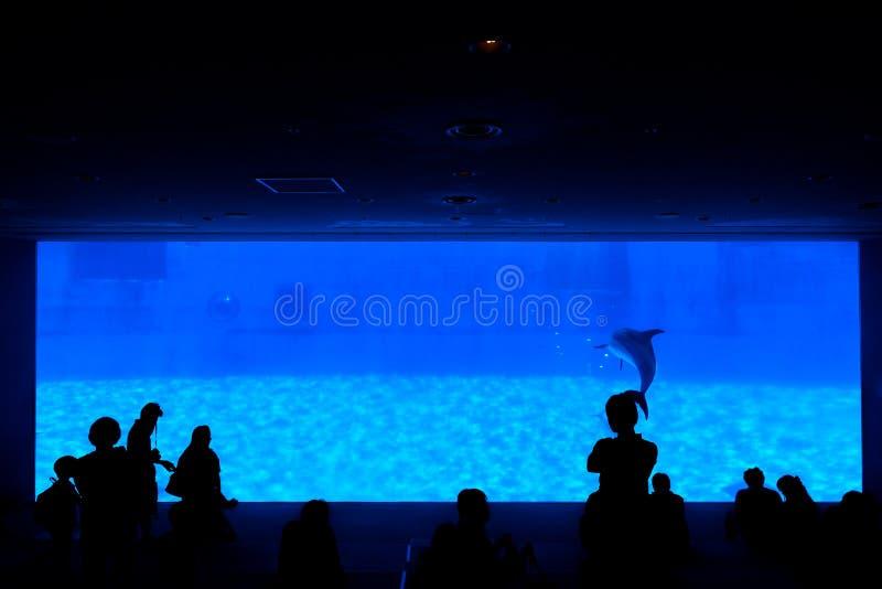 Silhouette des personnes recherchant l'apparence du dauphin images libres de droits