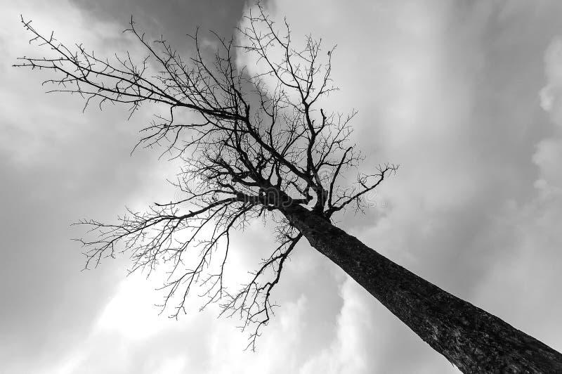 Silhouette die tree and sky stock photo