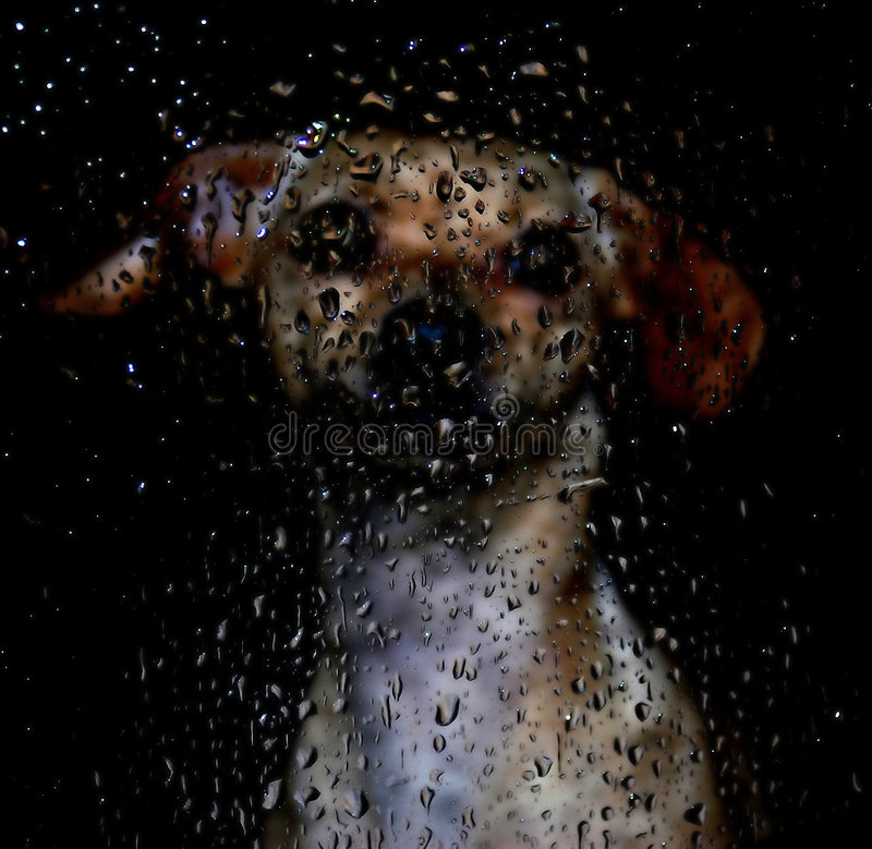 Silhouette dog. One dog behind a window with water drops stock photography