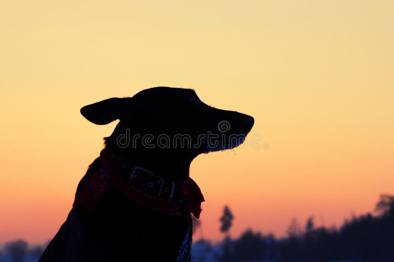 Silhouette of the dog on the street. Sad and lonely dog royalty free stock images