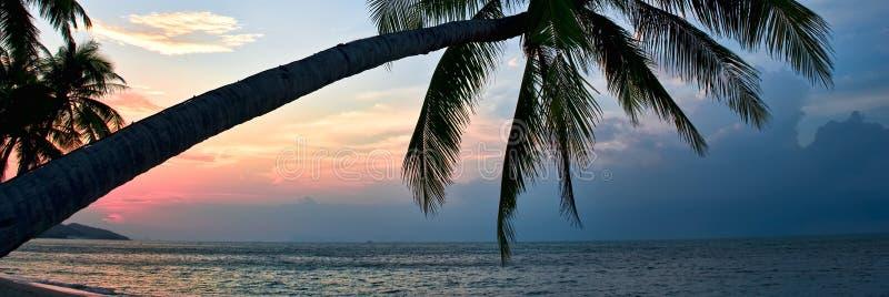 Silhouette du feuillage luxuriant de palmier se penchant au-dessus de la plage pendant le coucher du soleil color? lumineux idyll photos stock