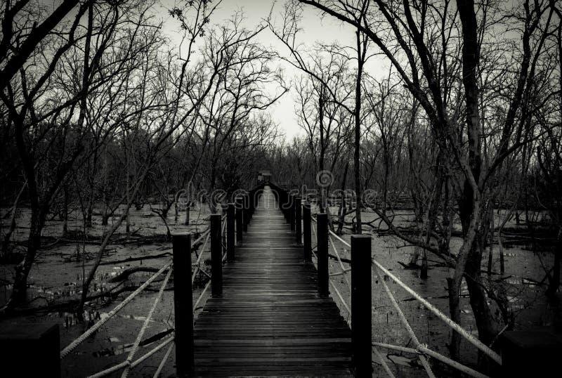 Silhouette du pont en bois avec la barrière blanche de corde dans la forêt Branc images stock