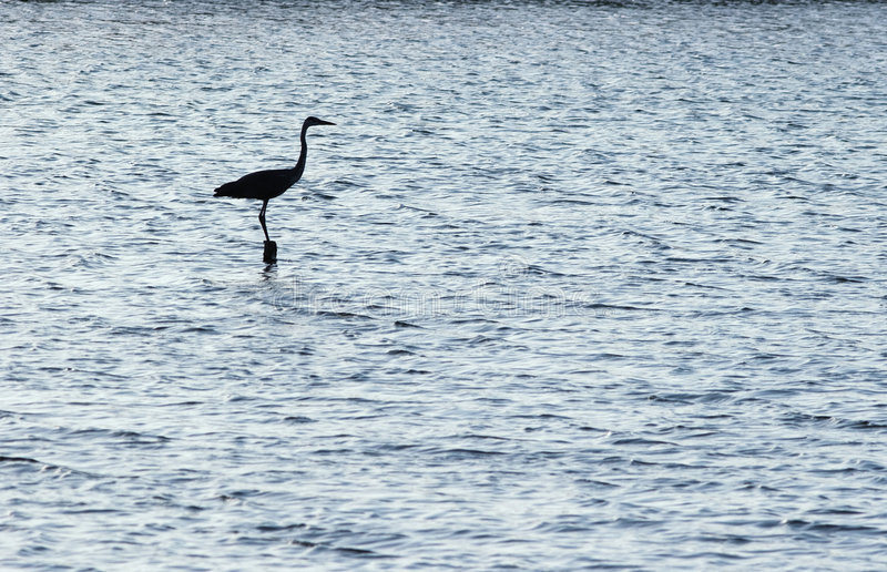 Silhouette of the egret. royalty free stock image